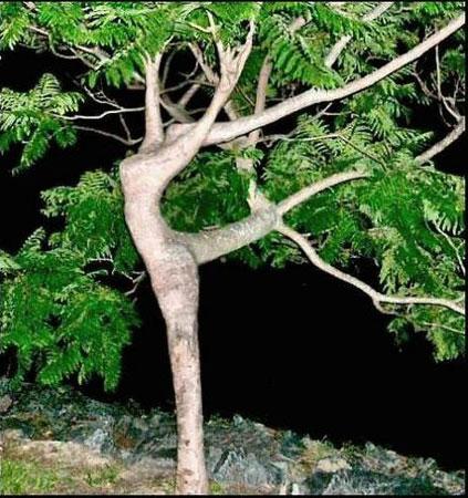 Rue Bricabrac, bdsm, arbre, paraphilies