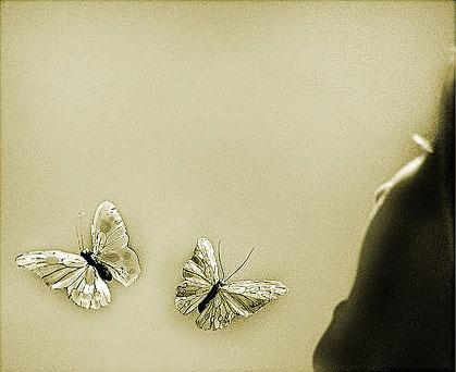 Rue Bricabrac, bdsm, blogue à deux, papillons, volailles