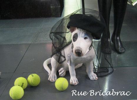 Rue Bricabrac, bdsm, chienne, tennis